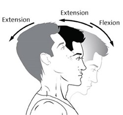 CBT25136EN-extension-flexion-1-286x266.jpg