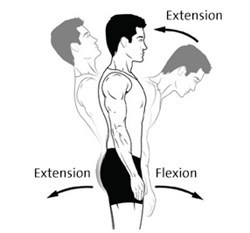 CBT25136EN-extension-flexion-3-286x266.jpg